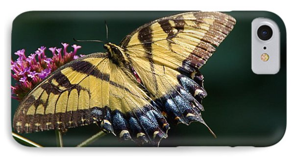 IPhone Case featuring the photograph Tigress And Verbena by Byron Varvarigos