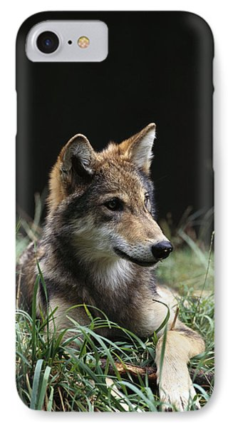 Timber Wolf Canis Lupus Portrait IPhone Case by Gerry Ellis