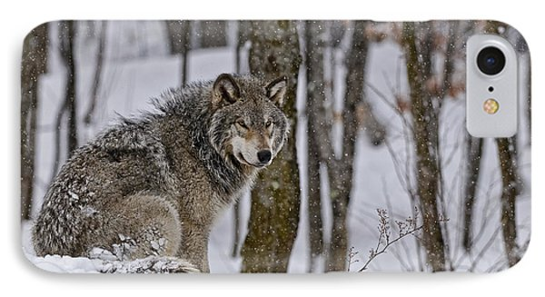 IPhone Case featuring the photograph Timber Wolf In Winter by Michael Cummings