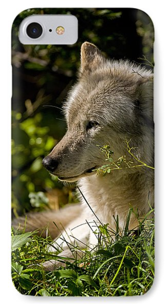 IPhone Case featuring the photograph Timber Wolf Portrait by Michael Cummings