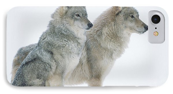 Timber Wolf Portrait Of Pair Sitting IPhone Case by Tim Fitzharris