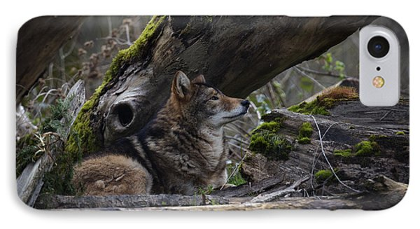 Timber Wolf IPhone Case by Randy Hall