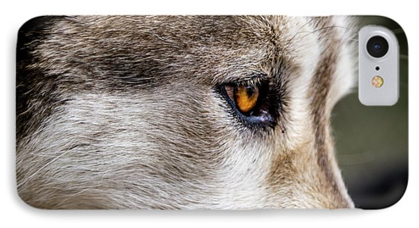 IPhone Case featuring the photograph Timber Wolf Stare by Teri Virbickis