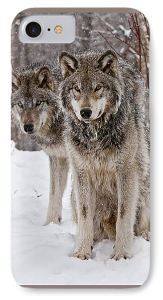 Timber Wolves In Winter Phone Case by Michael Cummings