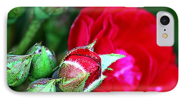 IPhone Case featuring the photograph Tiny Red Rosebuds by KayeCee Spain
