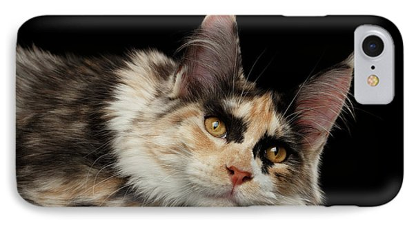 Tired Maine Coon Cat Lie On Black Background IPhone Case by Sergey Taran
