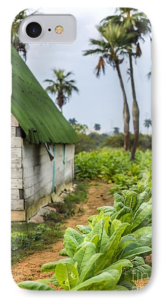 Tobacco Plantation IPhone Case
