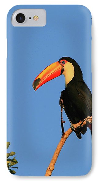 Toco Toucan IPhone Case by Bruce J Robinson