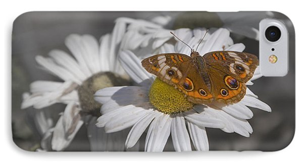 Topsail Butterfly IPhone Case