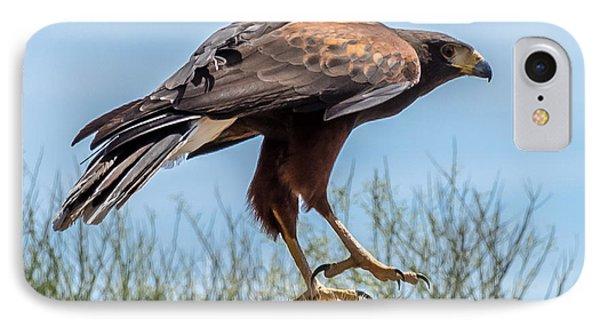 Tough Feet - Desert Hawk Phone Case by Leo Bounds