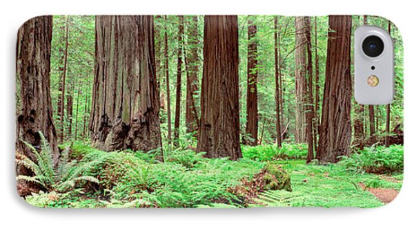 Trail, Avenue Of The Giants, Founders IPhone Case by Panoramic Images