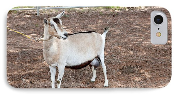 Transgenic Goat, Alpine Breed IPhone Case