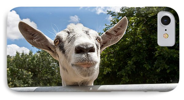 Transgenic Goat Peering Over Fence IPhone Case