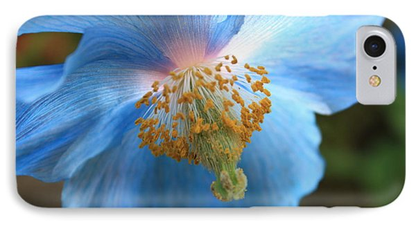 Translucent Blue Poppy IPhone Case by Carol Groenen