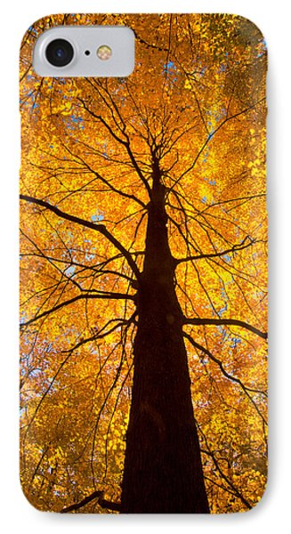 Tree Aflame IPhone Case by Linda Unger