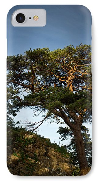 Tree At Maccarthy Mor Castle Phone Case by Douglas Barnett