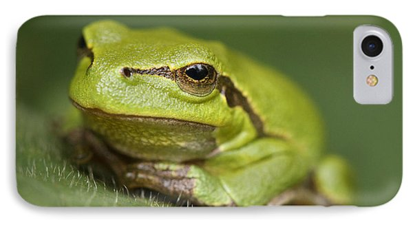 Tree Frog Cose Up IPhone Case by Roeselien Raimond