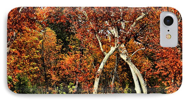 Tree Huggers IPhone Case by Kristin Elmquist