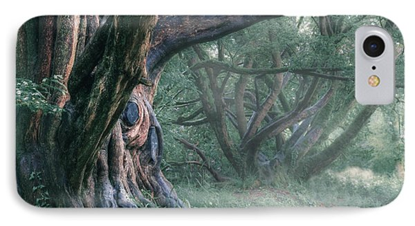 Tree In The Fog IPhone Case by Joana Kruse