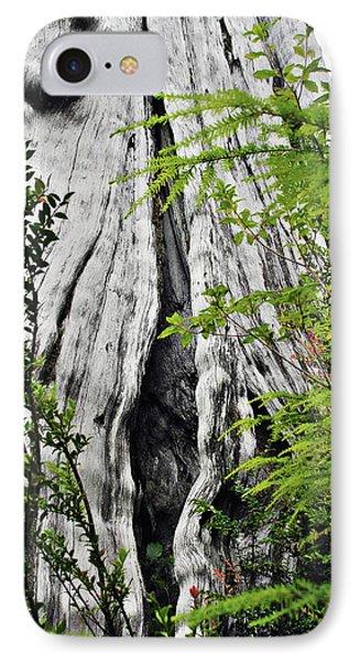 Tree Of Life - Duncan Memorial Big Western Red Cedar Phone Case by Christine Till