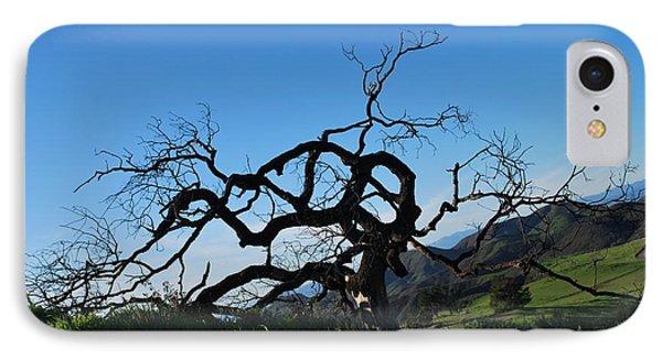 IPhone Case featuring the photograph Tree Of Light - Slanted Horizon by Matt Harang