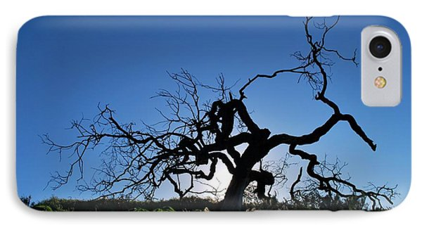 IPhone Case featuring the photograph Tree Of Light - Straight View 2 by Matt Harang