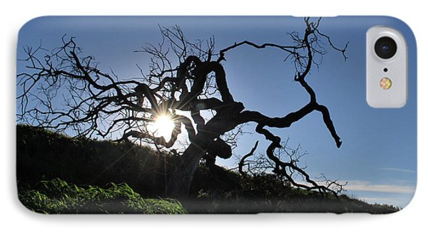 IPhone Case featuring the photograph Tree Of Light - Sunshine Through Branches by Matt Harang