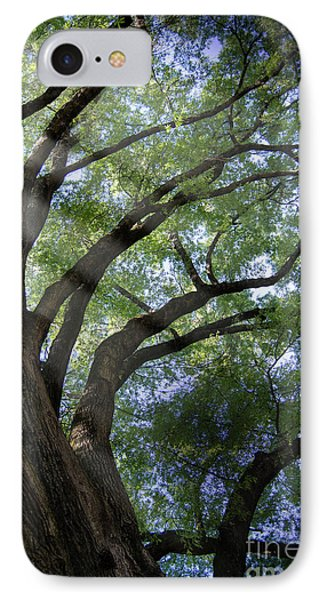 IPhone Case featuring the photograph Tree Rays by Brian Jones