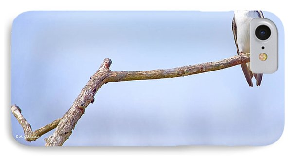 Tree Swallow On Branch IPhone Case by A Gurmankin