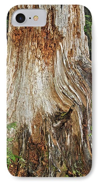 Trees On The Trails - Olympic National Park Wa Phone Case by Christine Till