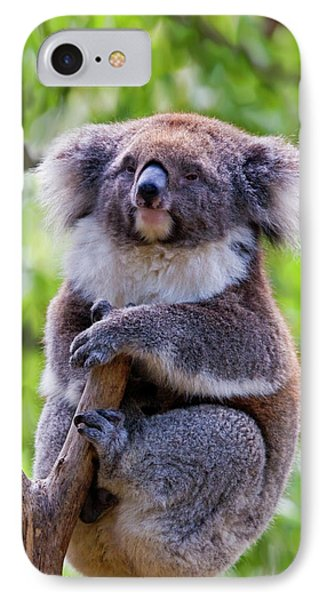 Treetop Koala IPhone Case