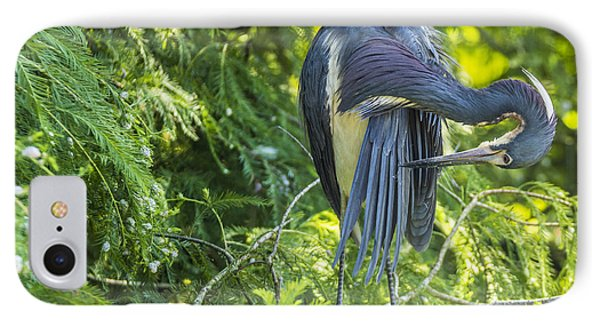 IPhone Case featuring the photograph Tri-colored Heron Grooming by Paula Porterfield-Izzo