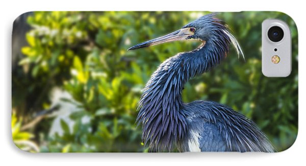 IPhone Case featuring the photograph Tri-colored Heron Plumage by Paula Porterfield-Izzo