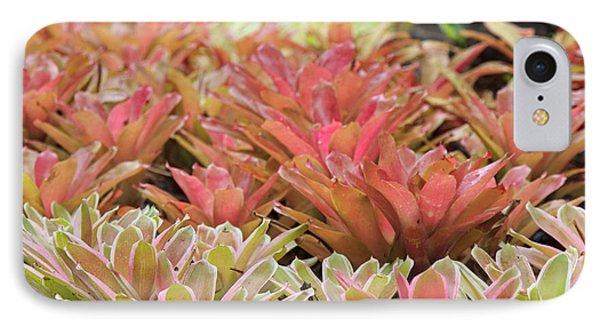 Tricolor Bromeliad IPhone Case