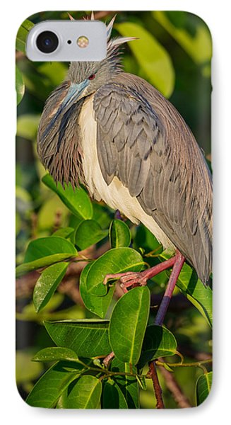 Tricolored At The Venice Rookery IPhone Case by Andres Leon