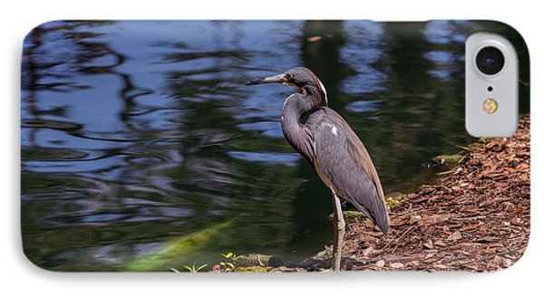 Tricolored Heron And Koi IPhone Case