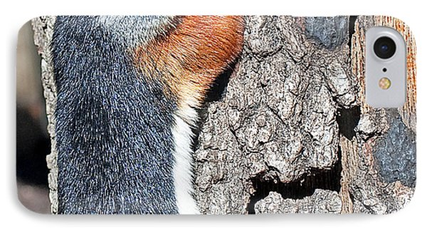 Tricolored Squirrel Phone Case by Kenneth Albin