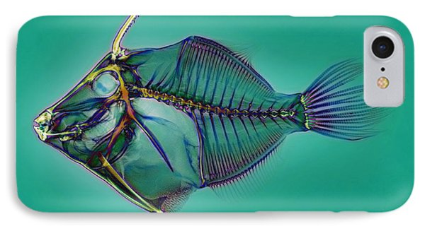 Triggerfish Skeleton, X-ray Phone Case by D. Roberts