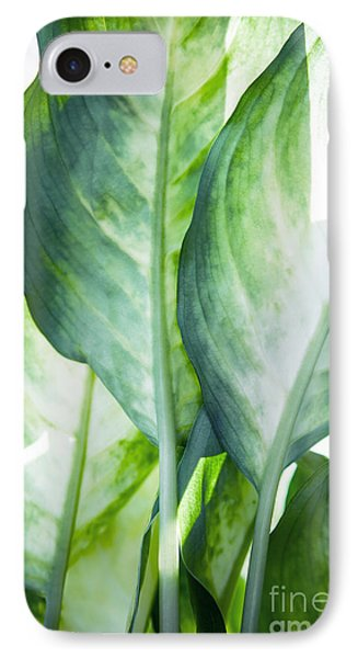 Tropic Abstract  IPhone Case by Mark Ashkenazi