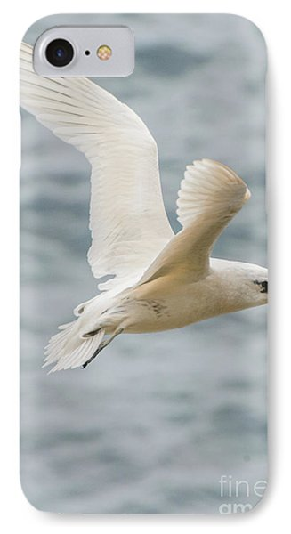 Tropic Bird 2 IPhone Case by Werner Padarin