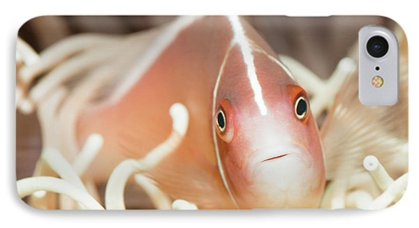 Tropical Fish Pink Clownfish Phone Case by MotHaiBaPhoto Prints