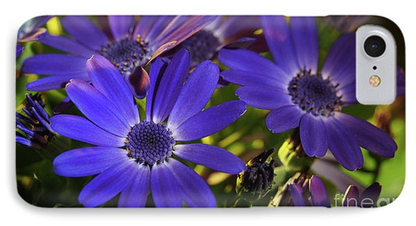 True Blue In The Late Afternoon Sunlight IPhone Case by Dorothy Lee