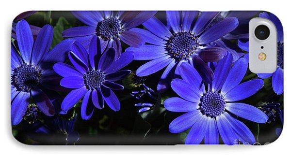 True Blue Pericallis Senetti Flowers IPhone Case by Dorothy Lee