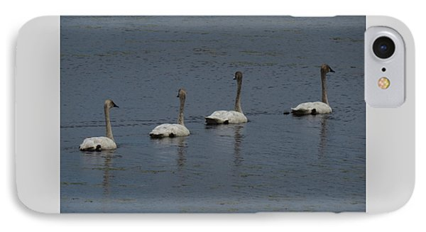 Trumpeter Swans IPhone Case
