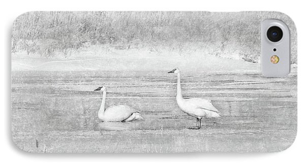 IPhone Case featuring the photograph Trumpeter Swan's Winter Rest Gray by Jennie Marie Schell