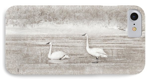 IPhone Case featuring the photograph Trumpeter Swan's Winter Rest Beige by Jennie Marie Schell