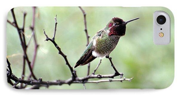 Trumpeting Hummingbird IPhone Case