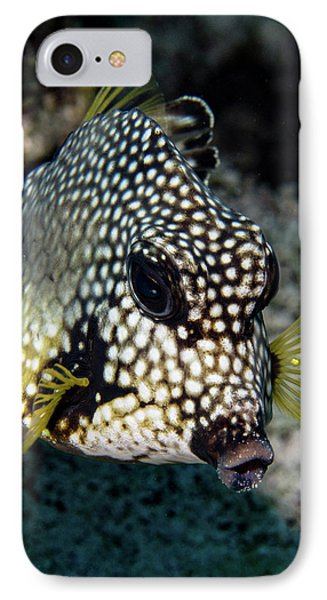 IPhone Case featuring the photograph Trunkfish Portrait by Jean Noren
