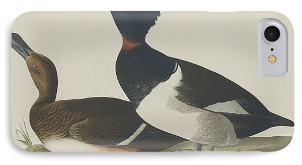 Tufted Duck IPhone Case