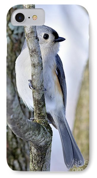 Tufted Titmouse On Dogwood IPhone Case by Thomas R Fletcher